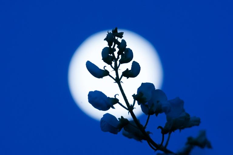 島貫 亨 様「月夜に咲いた花」